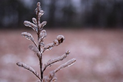 Professional indemnity claims: Surviving the frost